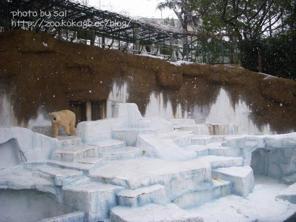 雪の天王寺