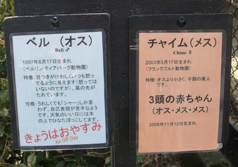 アムールヒョウ紹介