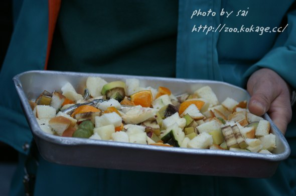 コモンリスザルの食べ物