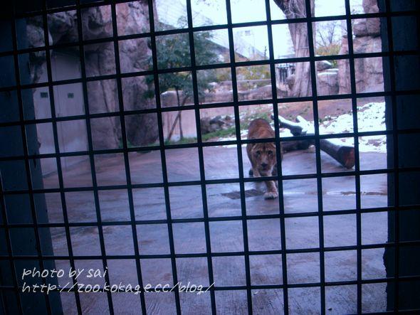 ライオン舎