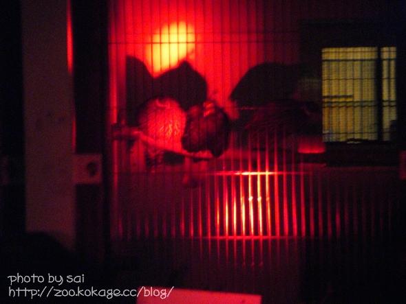 家族のための夜の動物園